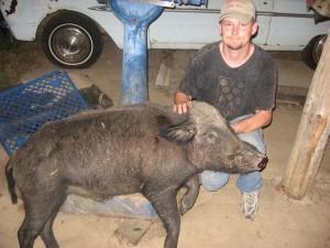 An occasional hog